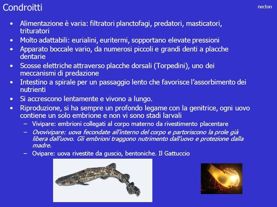 necton Alimentazione è varia: filtratori planctofagi, predatori, masticatori, trituratori Molto adattabili: eurialini, euritermi, sopportano elevate p