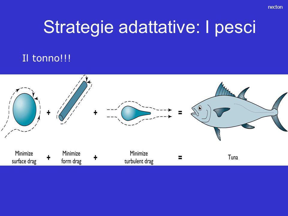 necton Il tonno!!! Strategie adattative: I pesci