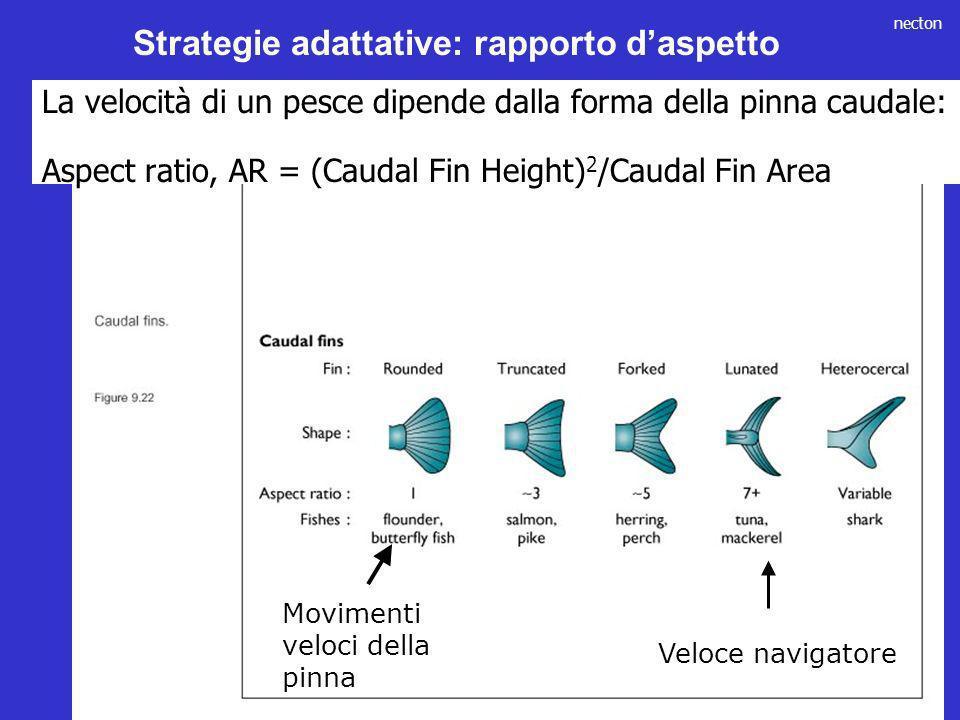 necton La velocità di un pesce dipende dalla forma della pinna caudale: Aspect ratio, AR = (Caudal Fin Height) 2 /Caudal Fin Area Veloce navigatore Mo