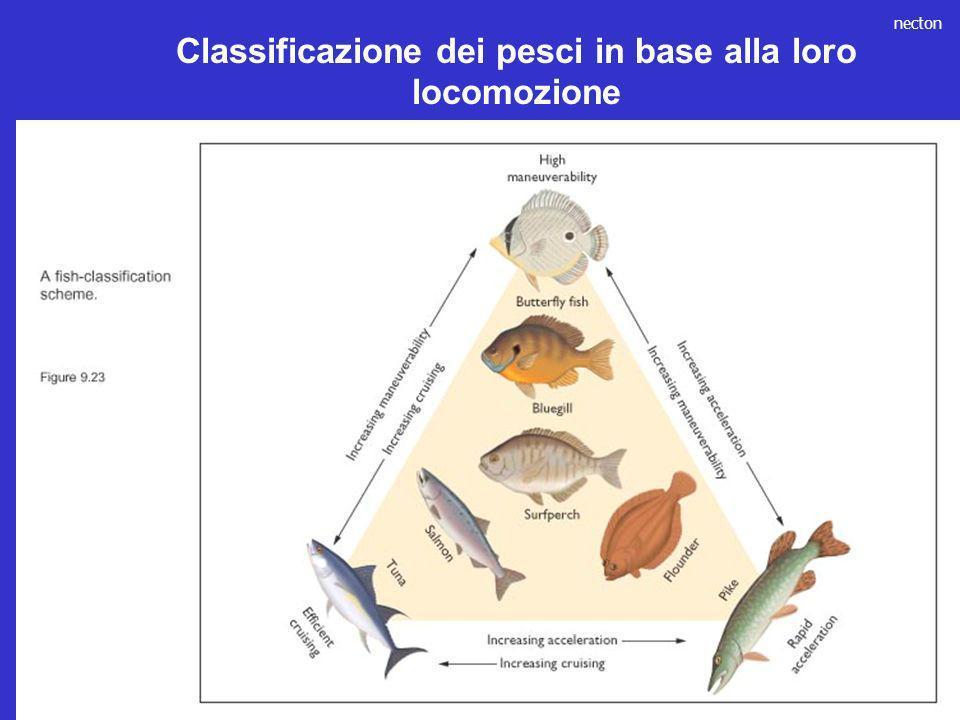 necton Classificazione dei pesci in base alla loro locomozione