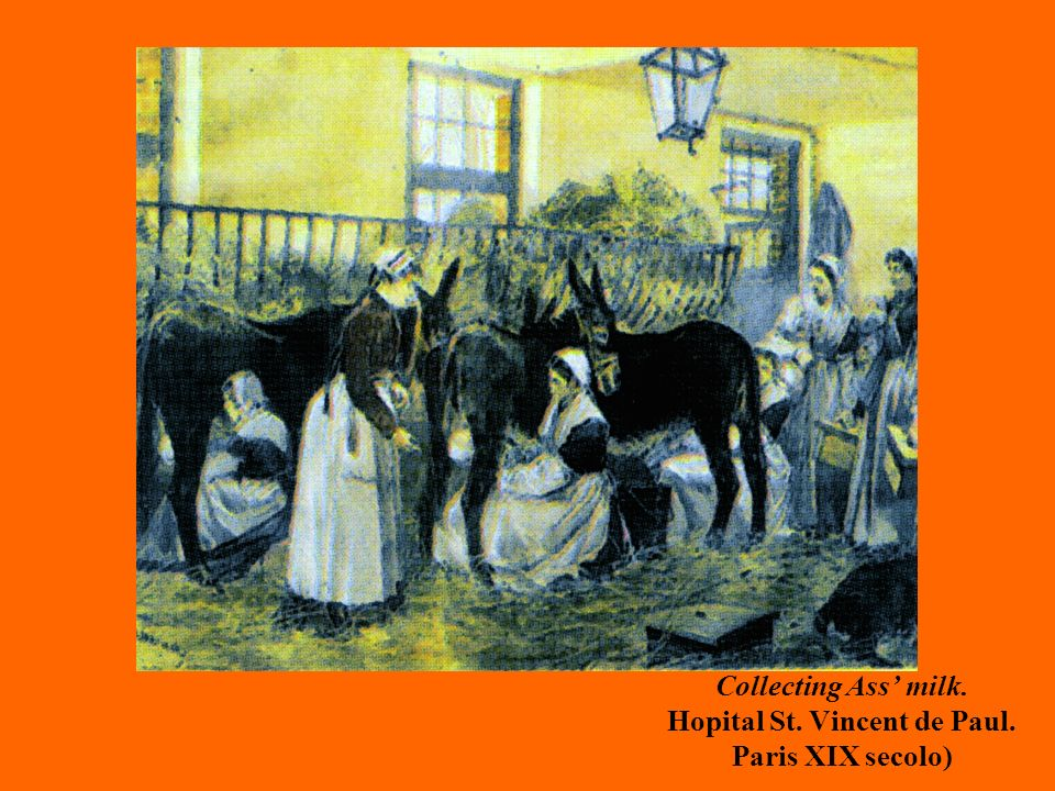 Collecting Ass milk. Hopital St. Vincent de Paul. Paris XIX secolo)