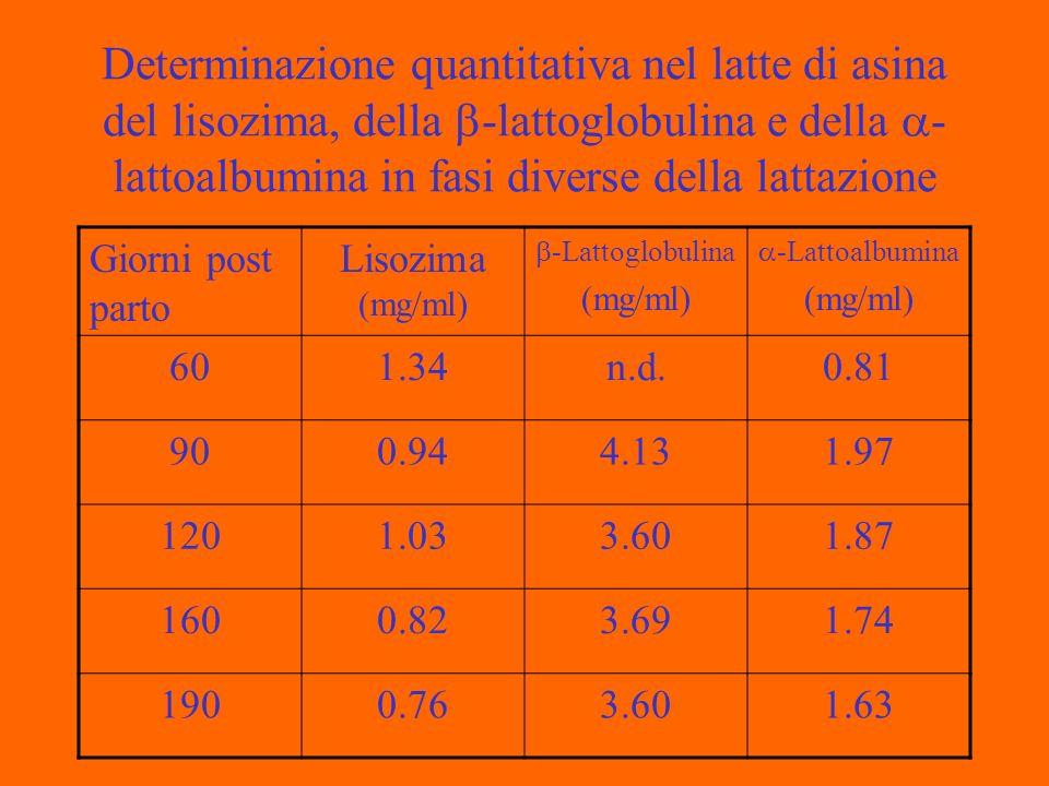 Determinazione quantitativa nel latte di asina del lisozima, della -lattoglobulina e della - lattoalbumina in fasi diverse della lattazione Giorni post parto Lisozima (mg/ml) -Lattoglobulina (mg/ml) -Lattoalbumina (mg/ml) 601.34n.d.0.81 900.944.131.97 1201.033.601.87 1600.823.691.74 1900.763.601.63