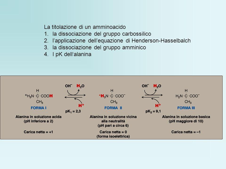 La titolazione di un amminoacido 1.la dissociazione del gruppo carbossilico 2.lapplicazione dellequazione di Henderson-Hasselbalch 3.la dissociazione