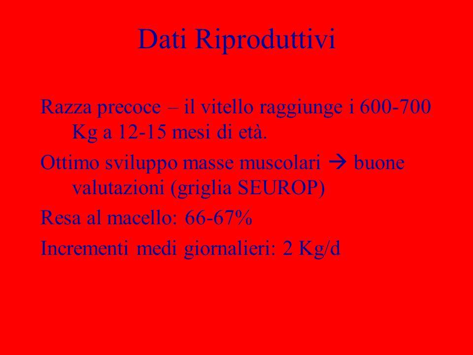 Dati Riproduttivi Razza precoce – il vitello raggiunge i 600-700 Kg a 12-15 mesi di età. Ottimo sviluppo masse muscolari buone valutazioni (griglia SE