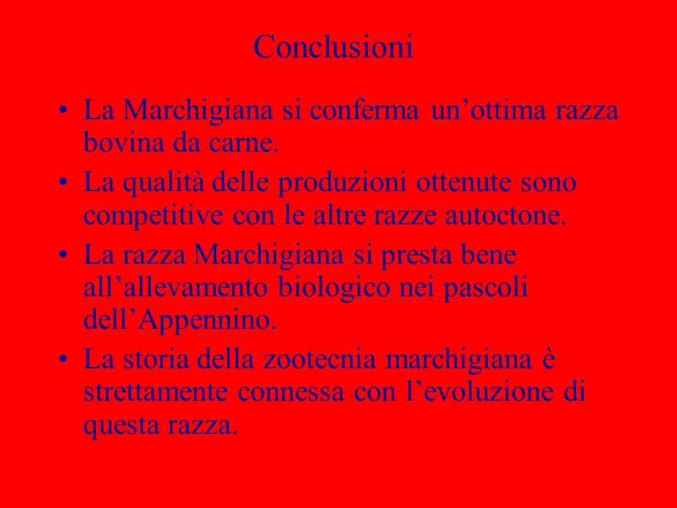 Conclusioni La Marchigiana si conferma unottima razza bovina da carne. La qualità delle produzioni ottenute sono competitive con le altre razze autoct