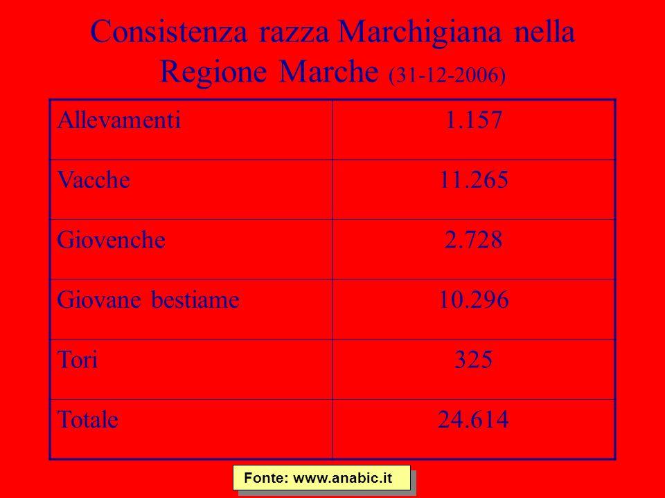 Consistenza razza Marchigiana nella Regione Marche (31-12-2006) Allevamenti1.157 Vacche11.265 Giovenche2.728 Giovane bestiame10.296 Tori325 Totale24.6