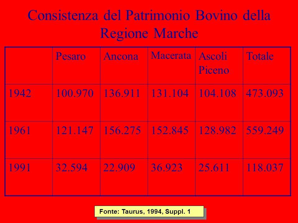 Consistenza del Patrimonio Bovino della Regione Marche PesaroAncona Macerata Ascoli Piceno Totale 1942100.970136.911131.104104.108473.093 1961121.1471
