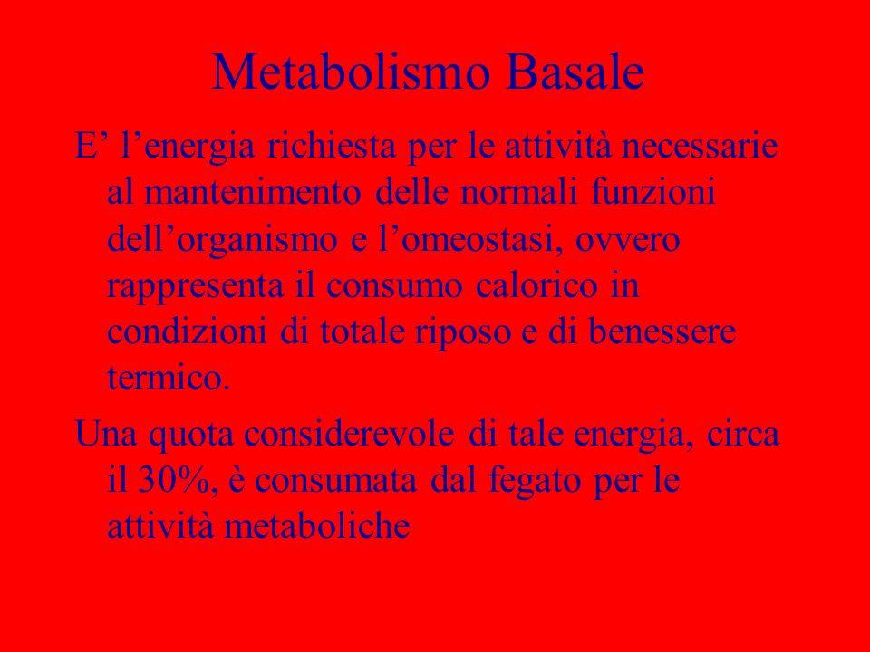 Metabolismo Basale E lenergia richiesta per le attività necessarie al mantenimento delle normali funzioni dellorganismo e lomeostasi, ovvero rappresen