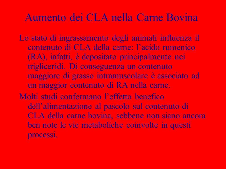 Aumento dei CLA nella Carne Bovina Lo stato di ingrassamento degli animali influenza il contenuto di CLA della carne: lacido rumenico (RA), infatti, è