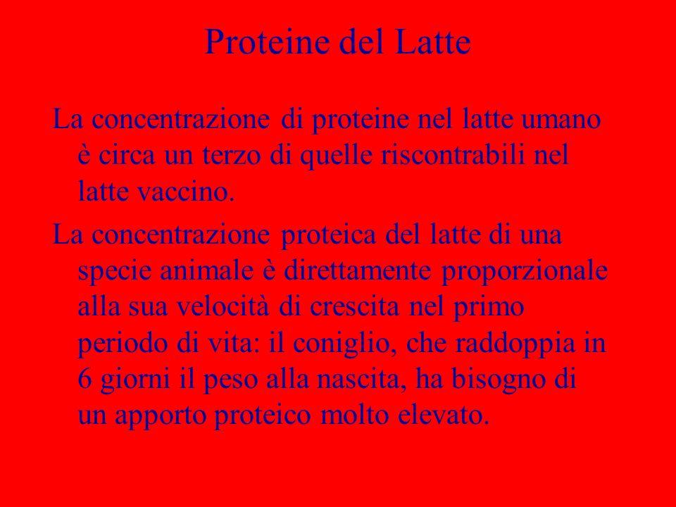 Proteine del Latte La concentrazione di proteine nel latte umano è circa un terzo di quelle riscontrabili nel latte vaccino. La concentrazione proteic