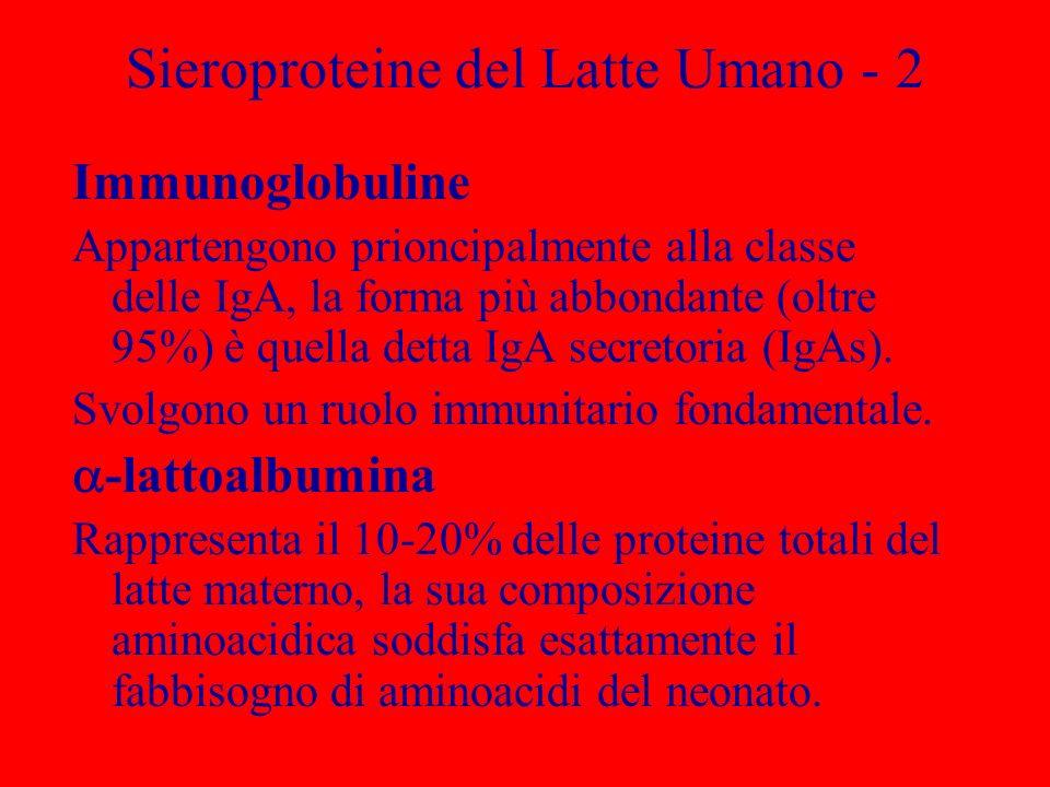 Sieroproteine del Latte Umano - 2 Immunoglobuline Appartengono prioncipalmente alla classe delle IgA, la forma più abbondante (oltre 95%) è quella det