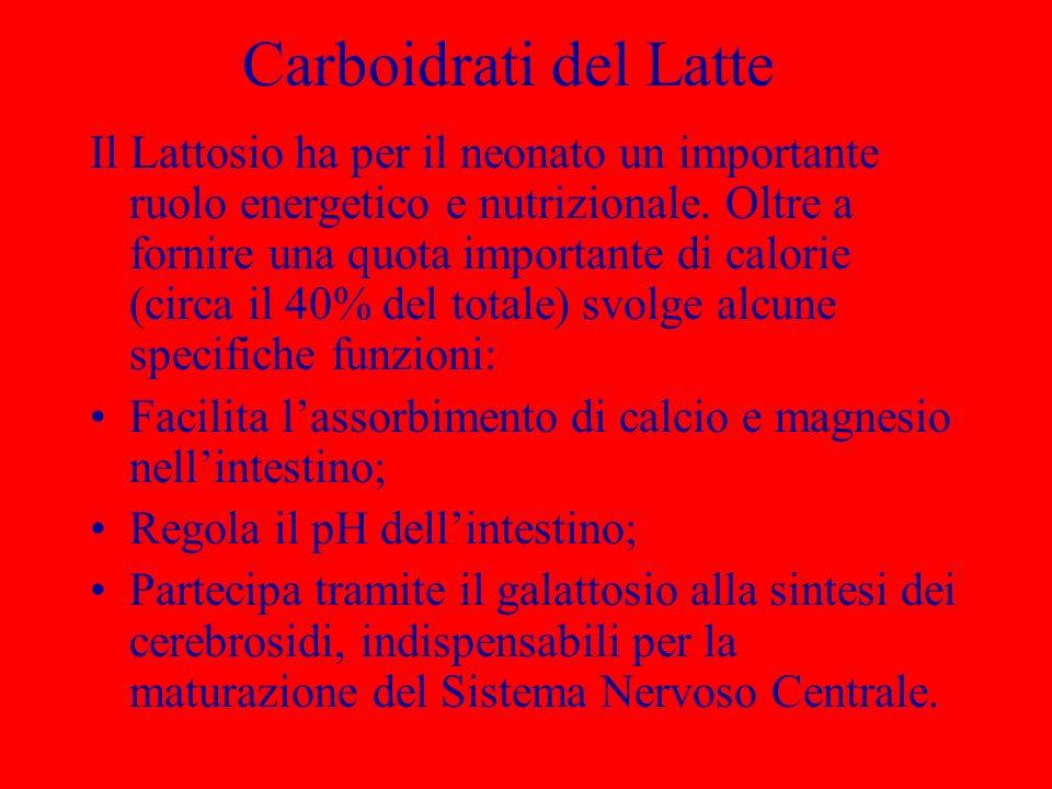 Carboidrati del Latte Il Lattosio ha per il neonato un importante ruolo energetico e nutrizionale. Oltre a fornire una quota importante di calorie (ci