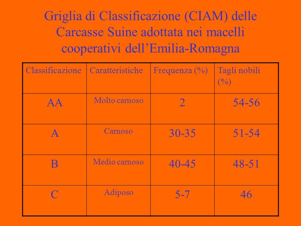Griglia di Classificazione (CIAM) delle Carcasse Suine adottata nei macelli cooperativi dellEmilia-Romagna ClassificazioneCaratteristicheFrequenza (%)Tagli nobili (%) AA Molto carnoso 254-56 A Carnoso 30-3551-54 B Medio carnoso 40-4548-51 C Adiposo 5-746