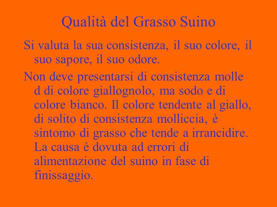 Qualità del Grasso Suino Si valuta la sua consistenza, il suo colore, il suo sapore, il suo odore.
