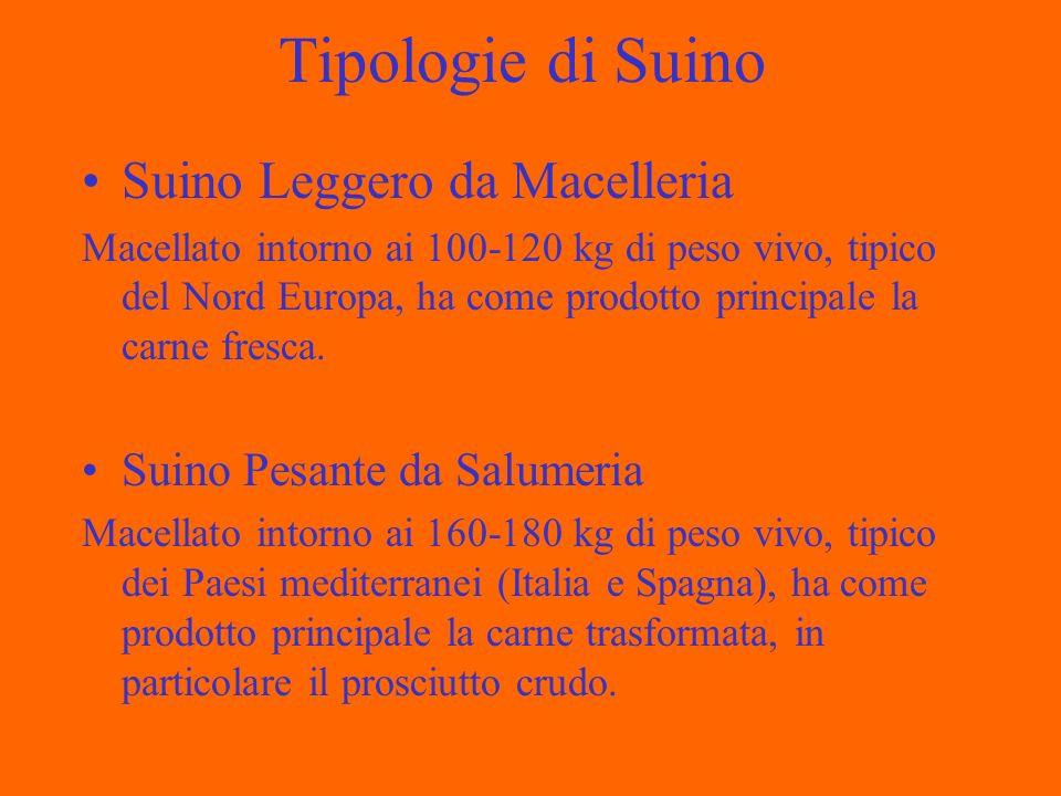 Tipologie di Suino Suino Leggero da Macelleria Macellato intorno ai 100-120 kg di peso vivo, tipico del Nord Europa, ha come prodotto principale la carne fresca.