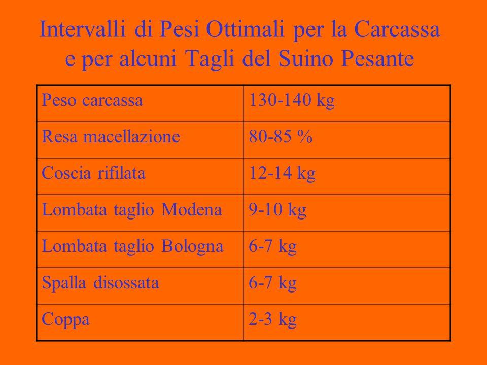 Qualità della Carcassa Suina Caratteristiche da Valutare Contenuto in carne magra, peso tagli pregiati, peso tagli grassi, spessore muscoli, conformazione muscoli.