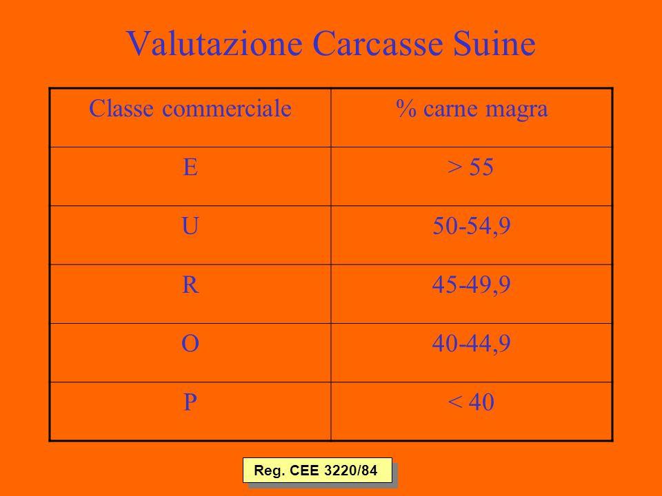 Valutazione Carcasse Suine Classe commerciale% carne magra E> 55 U50-54,9 R45-49,9 O40-44,9 P< 40 Reg.