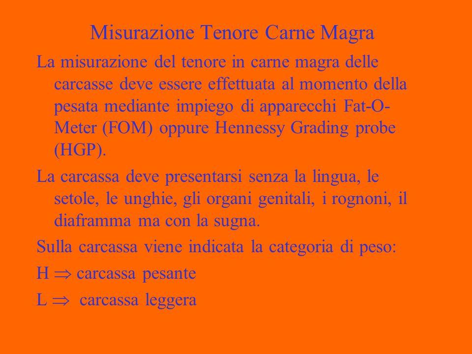 Misurazione Tenore Carne Magra La misurazione del tenore in carne magra delle carcasse deve essere effettuata al momento della pesata mediante impiego di apparecchi Fat-O- Meter (FOM) oppure Hennessy Grading probe (HGP).