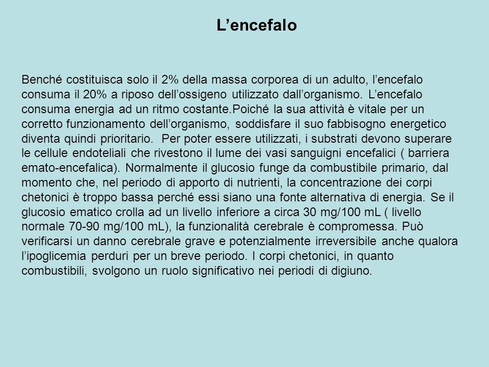 Lencefalo Benché costituisca solo il 2% della massa corporea di un adulto, lencefalo consuma il 20% a riposo dellossigeno utilizzato dallorganismo. Le