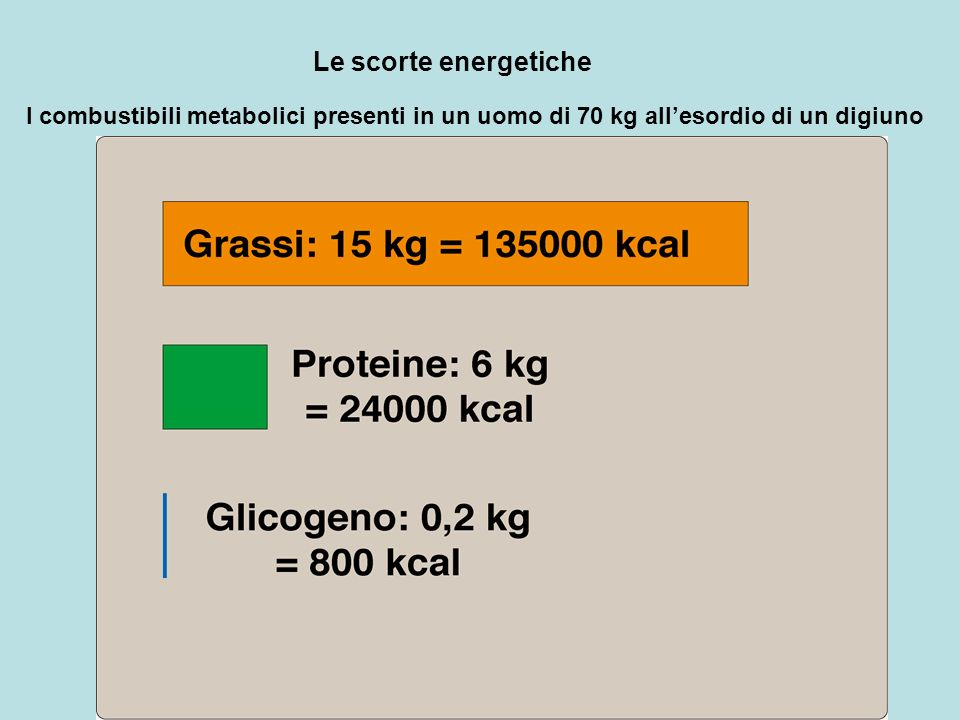 Le scorte energetiche I combustibili metabolici presenti in un uomo di 70 kg allesordio di un digiuno