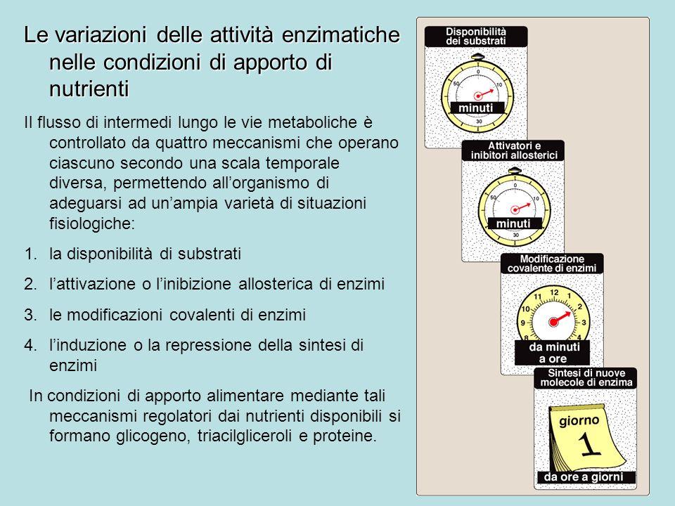 Le variazioni delle attività enzimatiche nelle condizioni di apporto di nutrienti Il flusso di intermedi lungo le vie metaboliche è controllato da qua