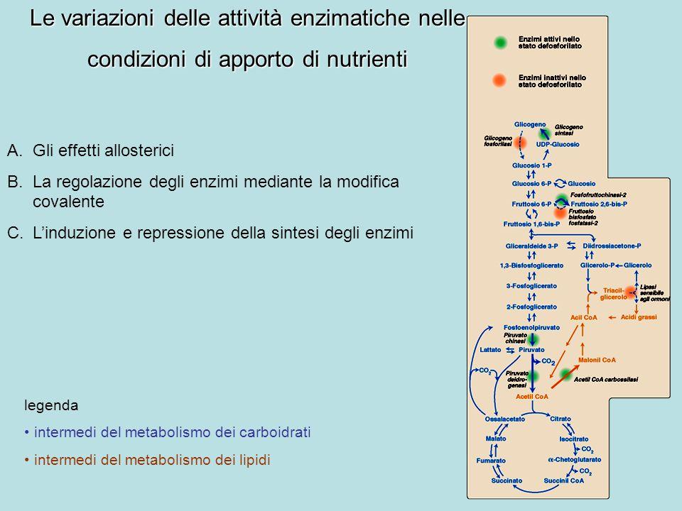 A.Gli effetti allosterici B.La regolazione degli enzimi mediante la modifica covalente C.Linduzione e repressione della sintesi degli enzimi Le variaz