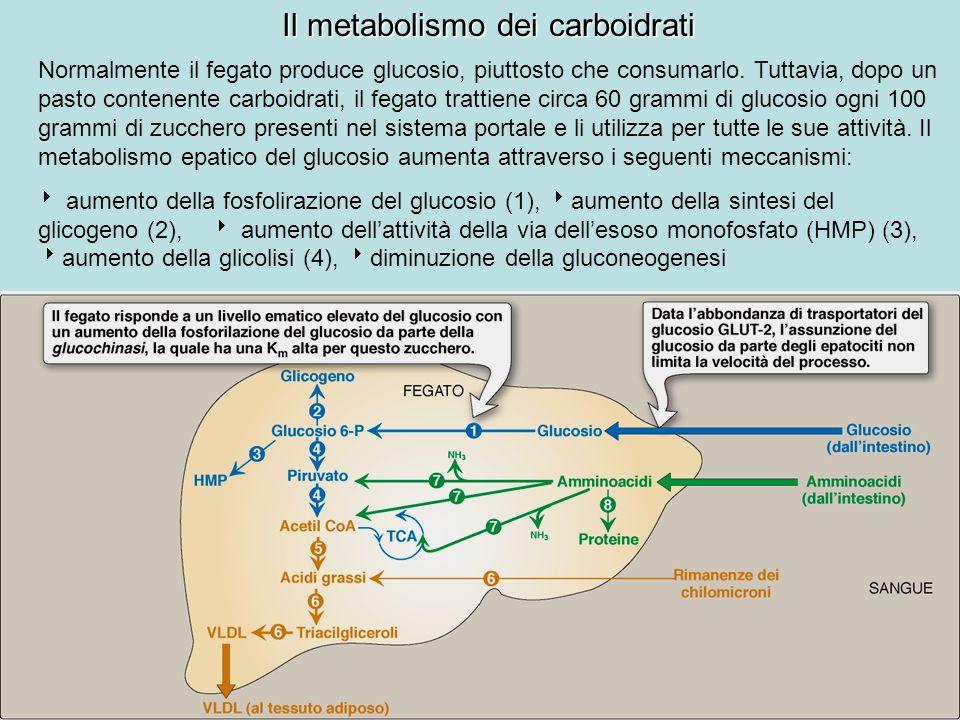 Il metabolismo dei carboidrati Normalmente il fegato produce glucosio, piuttosto che consumarlo. Tuttavia, dopo un pasto contenente carboidrati, il fe