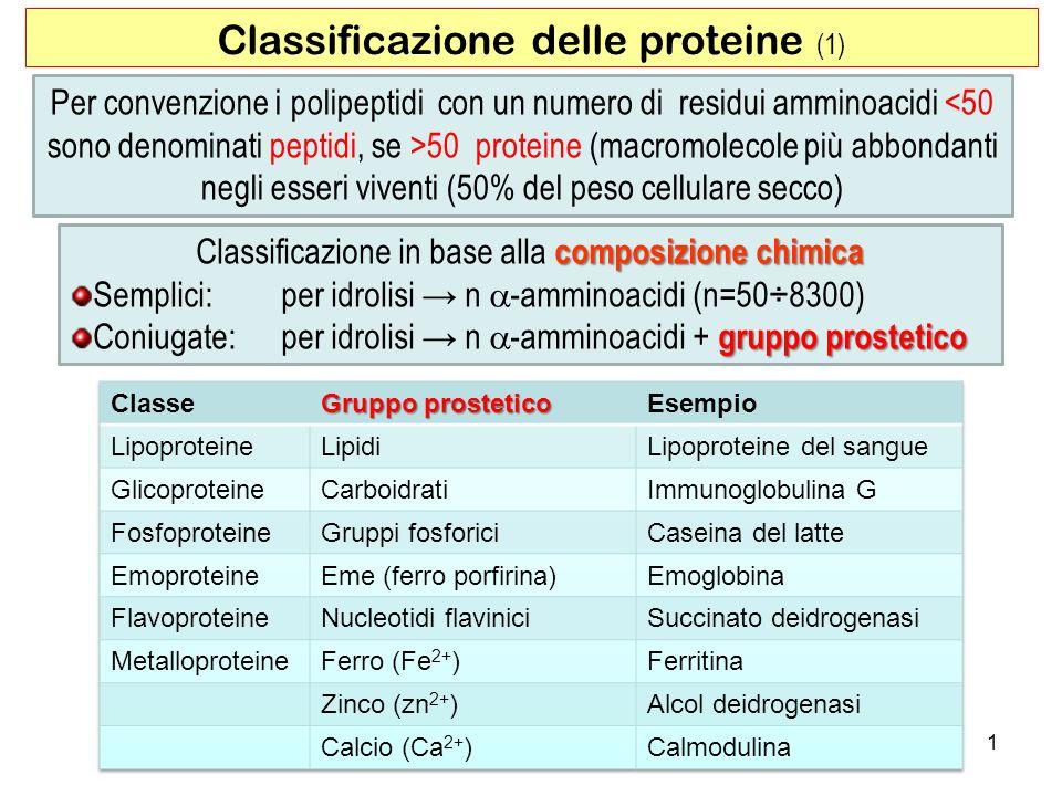 Classificazione delle proteine (1) 1 Per convenzione i polipeptidi con un numero di residui amminoacidi 50 proteine (macromolecole più abbondanti negl