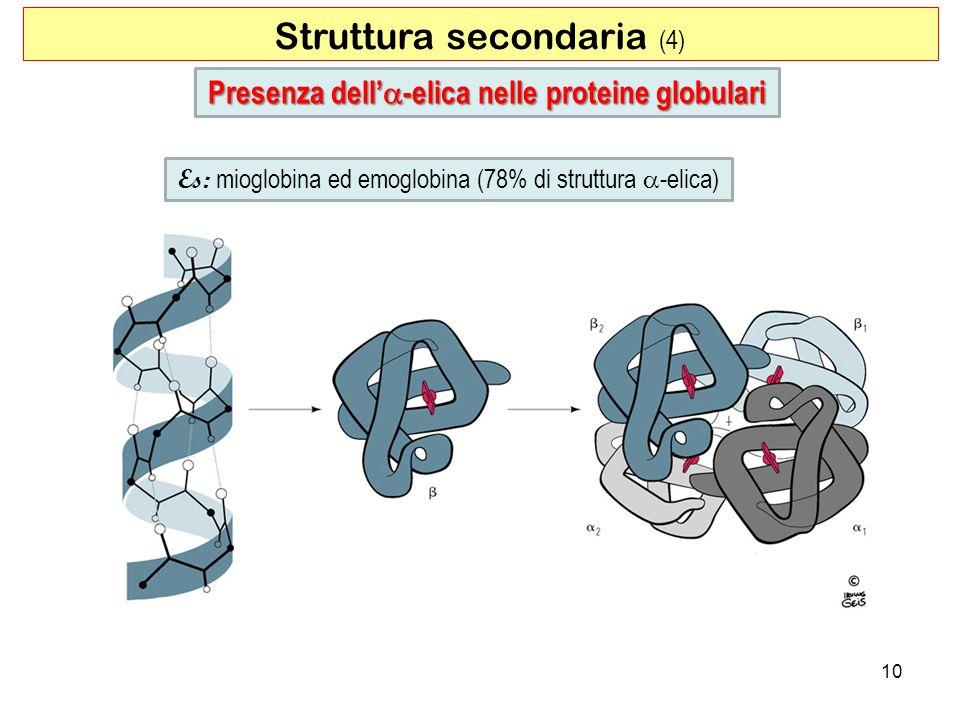 Struttura secondaria (4) 10 Presenza dell -elica nelle proteine globulari Es: mioglobina ed emoglobina (78% di struttura -elica)