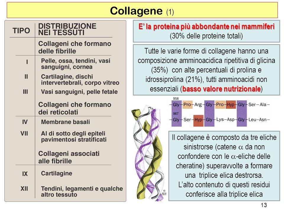 Il collagene è composto da tre eliche sinistrorse (catene da non confondere con le -eliche delle cheratine) superavvolte a formare una triplice elica