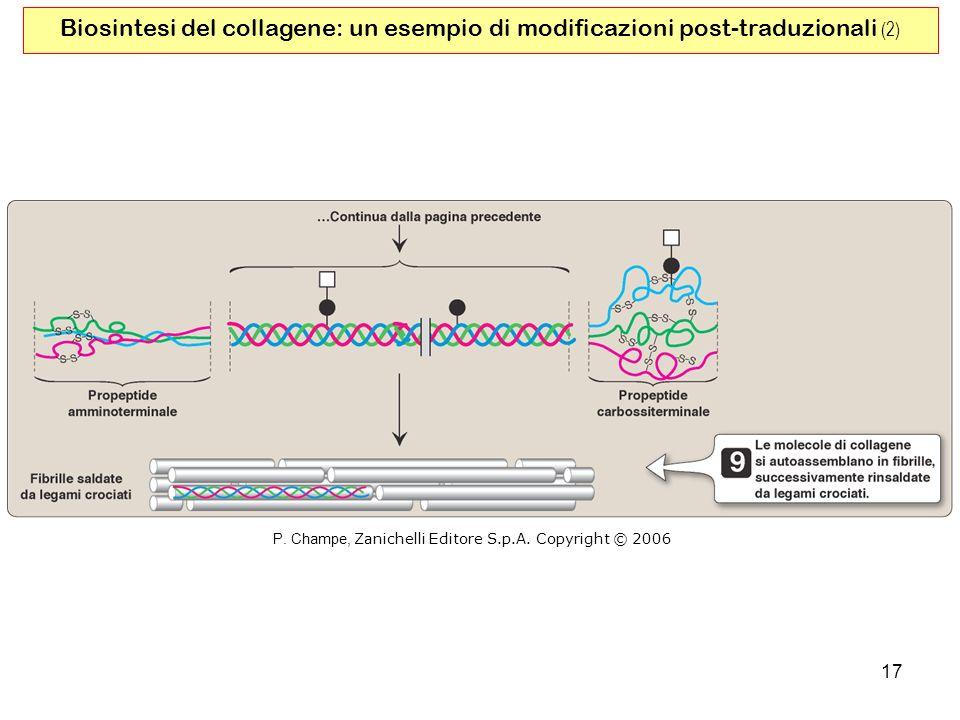 17 Biosintesi del collagene: un esempio di modificazioni post-traduzionali (2) P. Champe, Zanichelli Editore S.p.A. Copyright © 2006