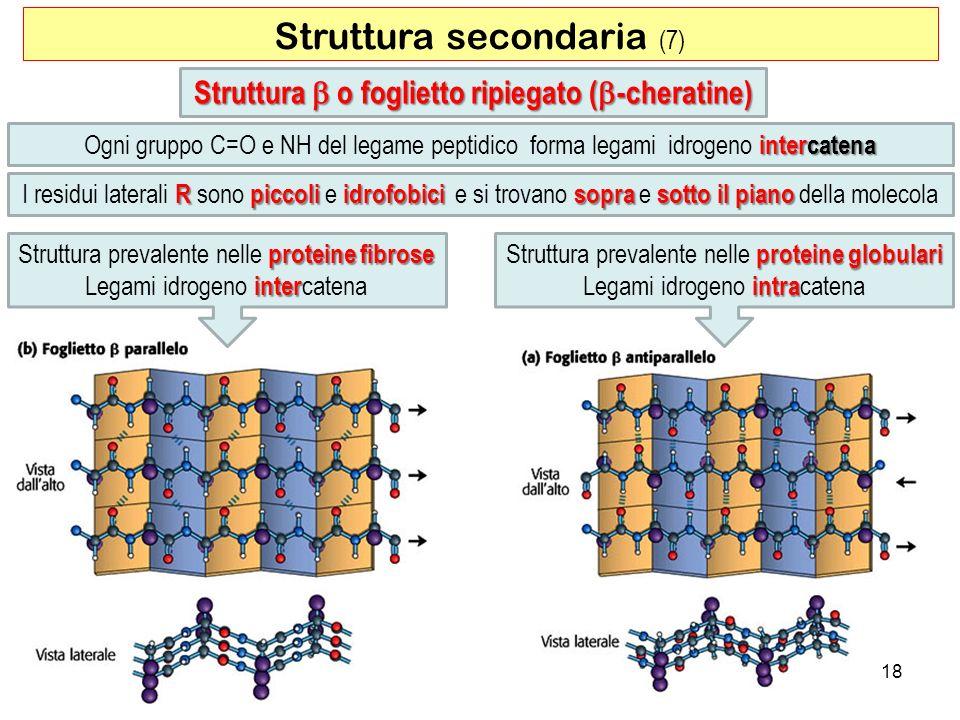 Struttura secondaria (7) 18 Struttura o foglietto ripiegato ( -cheratine) intercatena Ogni gruppo C=O e NH del legame peptidico forma legami idrogeno