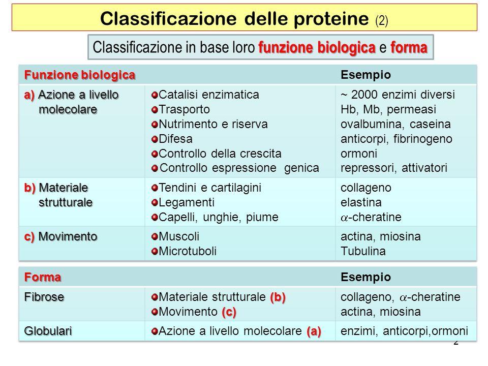 Classificazione delle proteine (2) 2 funzione biologica forma Classificazione in base loro funzione biologica e forma