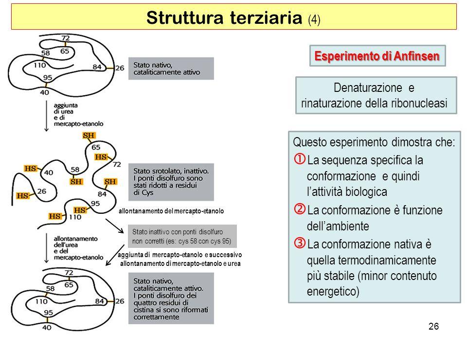 Struttura terziaria (4) 26 Esperimento di Anfinsen Denaturazione e rinaturazione della ribonucleasi Questo esperimento dimostra che: La sequenza speci