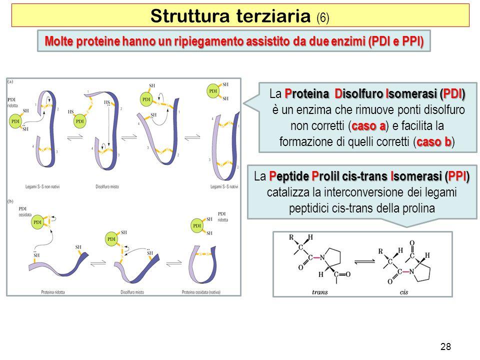 Struttura terziaria (6) 28 Molte proteine hanno un ripiegamento assistito da due enzimi (PDI e PPI) Proteina Disolfuro Isomerasi (PDI) La Proteina Dis