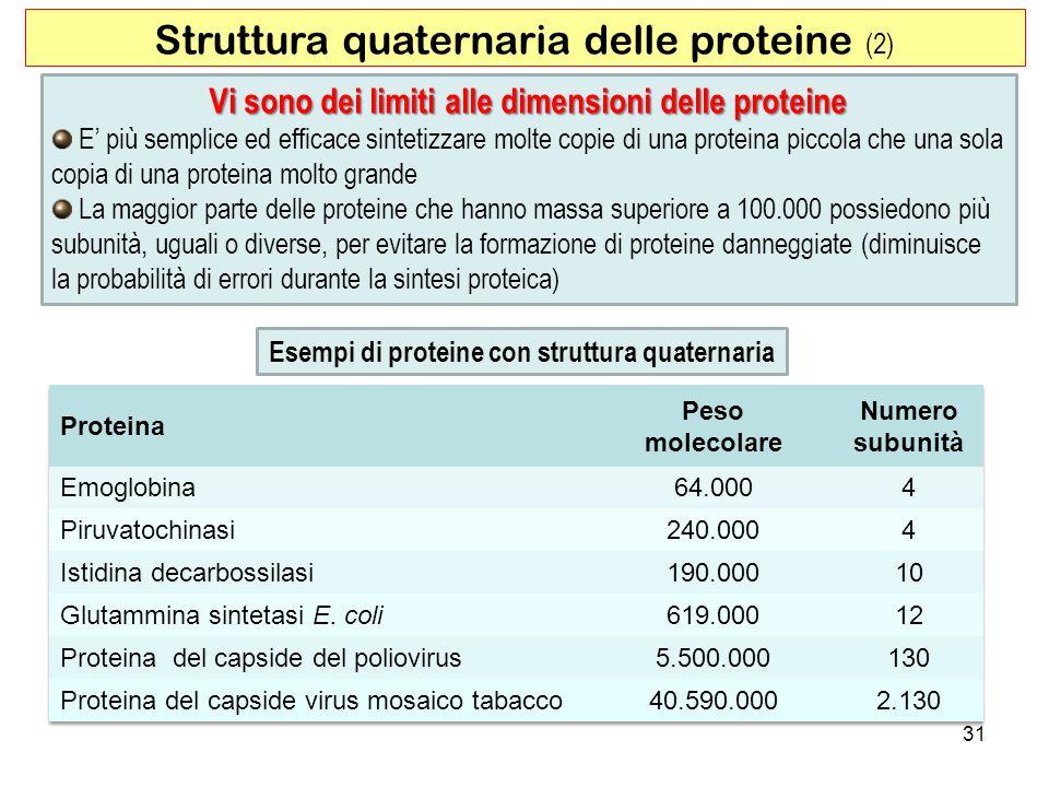 31 Struttura quaternaria delle proteine (2) Esempi di proteine con struttura quaternaria Vi sono dei limiti alle dimensioni delle proteine E più sempl