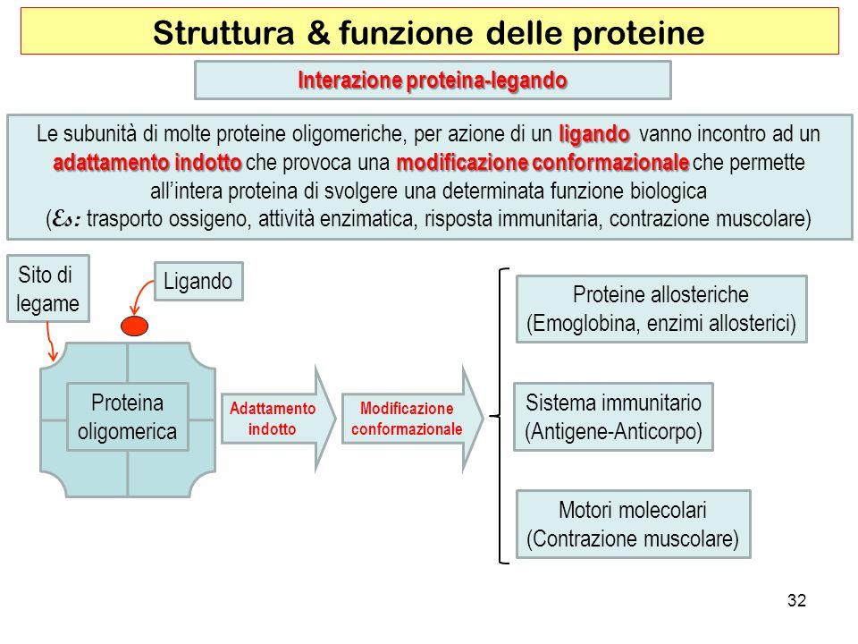 32 Struttura & funzione delle proteine ligando adattamento indotto modificazione conformazionale Le subunità di molte proteine oligomeriche, per azion