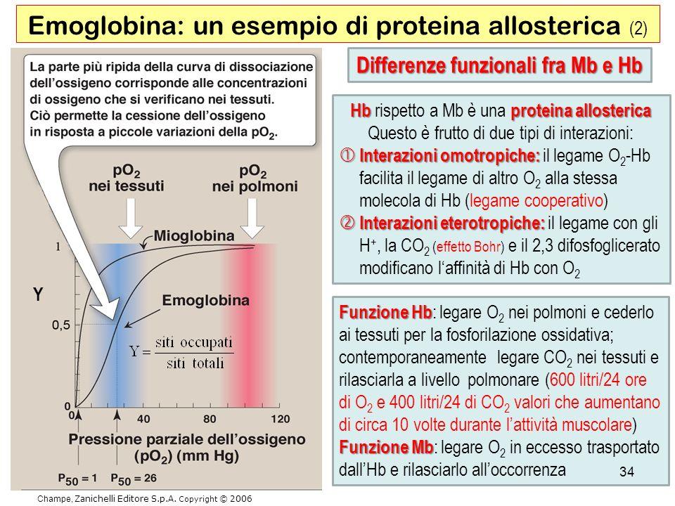 Champe, Zanichelli Editore S.p.A. Copyright © 2006 Emoglobina: un esempio di proteina allosterica (2) Hbproteina allosterica Hb rispetto a Mb è una pr