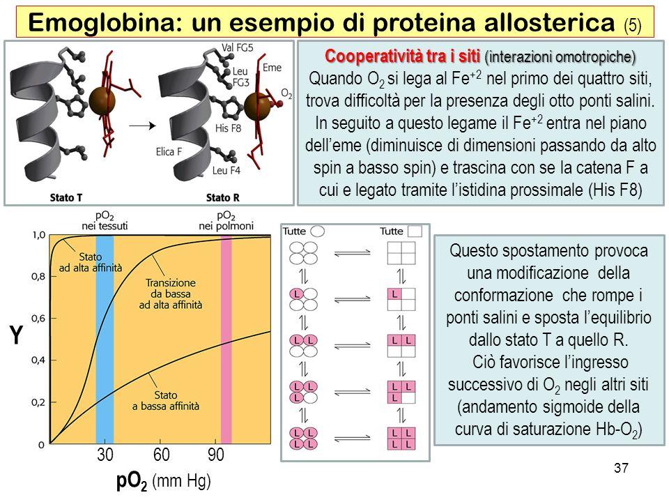 Y 306090 pO 2 (mm Hg) 37 Emoglobina: un esempio di proteina allosterica (5) Cooperatività tra i siti (interazioni omotropiche) Quando O 2 si lega al F
