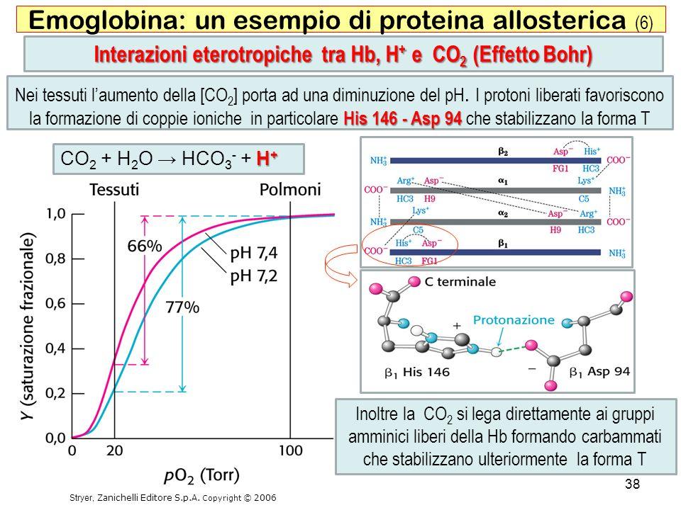 Inoltre la CO 2 si lega direttamente ai gruppi amminici liberi della Hb formando carbammati che stabilizzano ulteriormente la forma T 38 Emoglobina: u