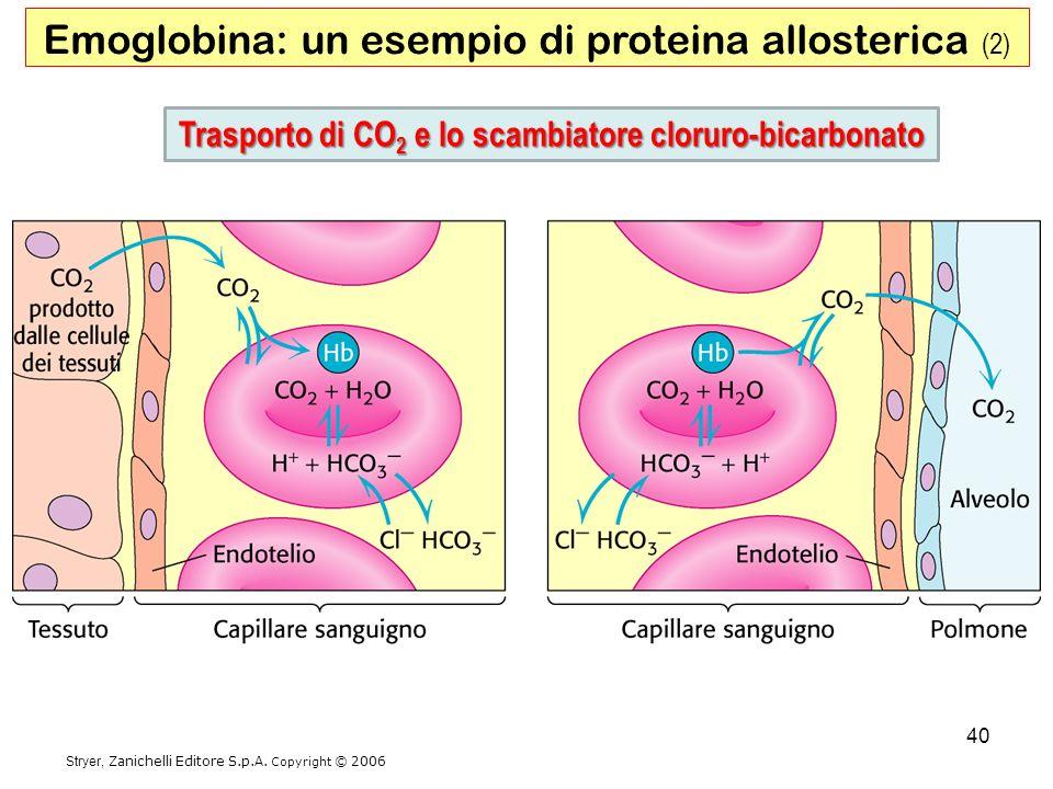 Emoglobina: un esempio di proteina allosterica (2) Stryer, Zanichelli Editore S.p.A. Copyright © 2006 Trasporto di CO 2 e lo scambiatore cloruro-bicar