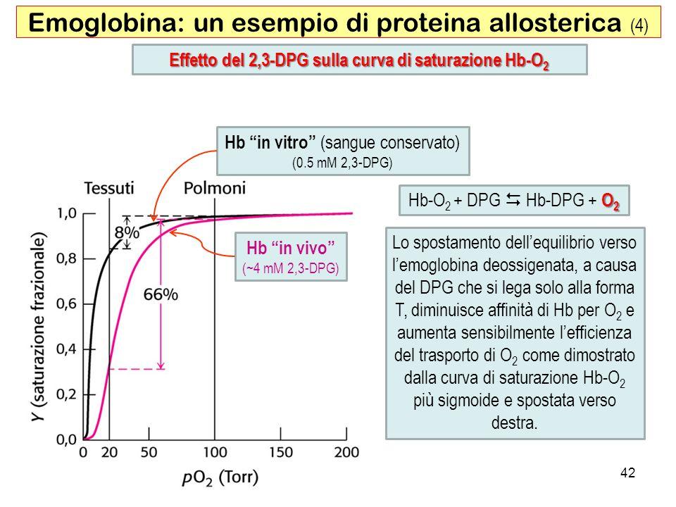 Hb in vivo (~4 mM 2,3-DPG) Hb in vitro (sangue conservato) (0.5 mM 2,3-DPG) 42 Effetto del 2,3-DPG sulla curva di saturazione Hb-O 2 Emoglobina: un es
