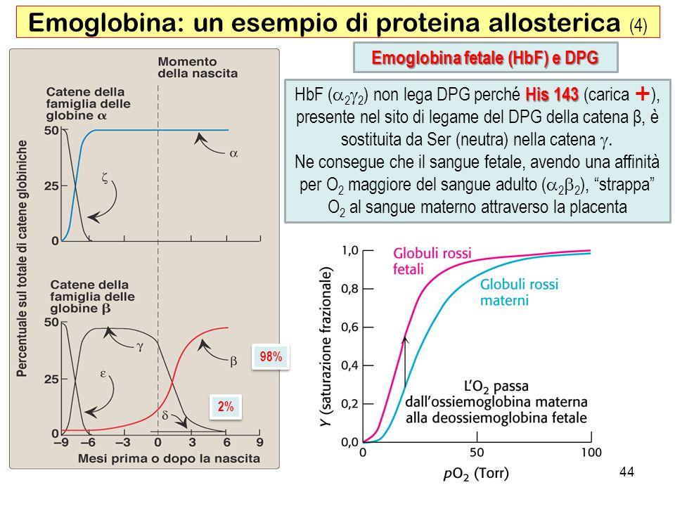 Emoglobina fetale (HbF) e DPG Emoglobina: un esempio di proteina allosterica (4) His 143 HbF ( 2 2 ) non lega DPG perché His 143 (carica ), presente n