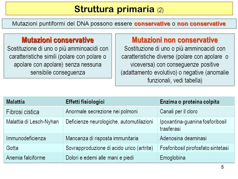 Struttura primaria (2) 5 conservativenon conservative Mutazioni puntiformi del DNA possono essere conservative o non conservative Mutazioni conservati