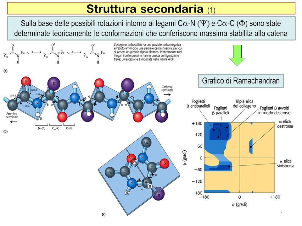 Struttura secondaria (1) 7 Sulla base delle possibili rotazioni intorno ai legami C -N e C -C ( ) sono state determinate teoricamente le conformazioni