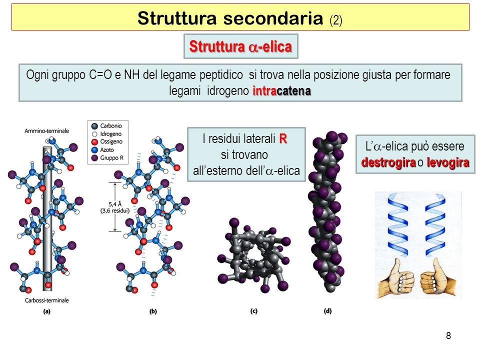 Struttura secondaria (2) 8 Struttura -elica Ogni gruppo C=O e NH del legame peptidico si trova nella posizione giusta per formare intracatena legami i