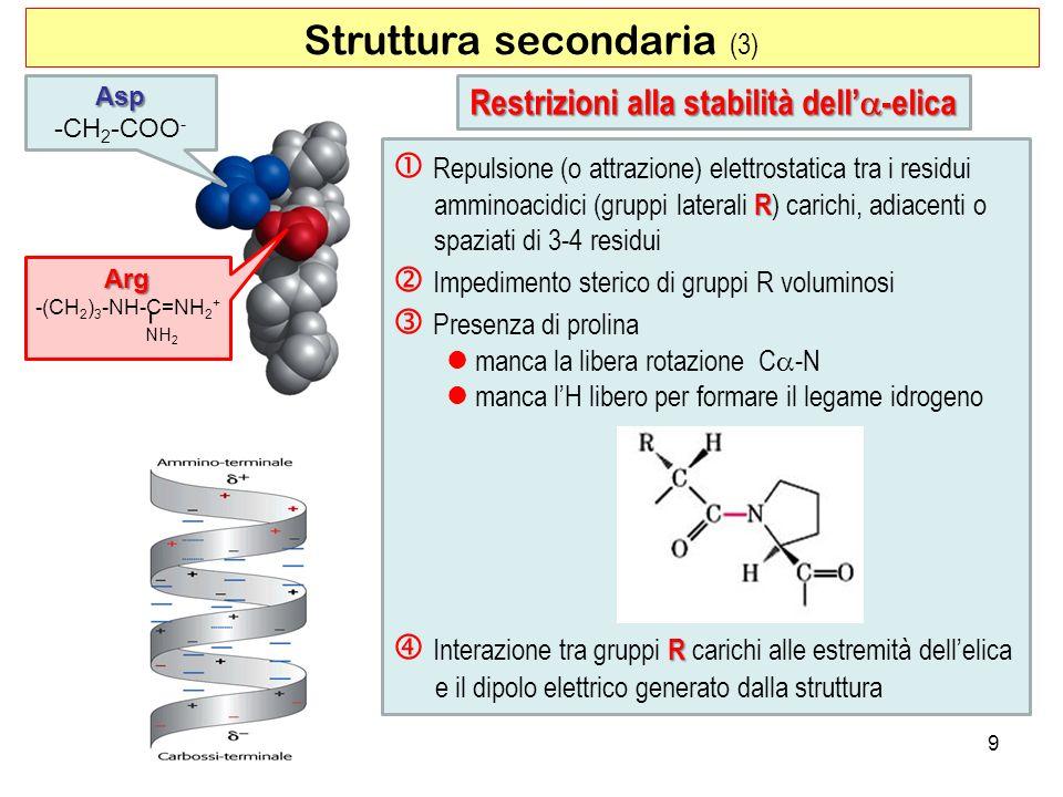 Struttura secondaria (3) 9 Restrizioni alla stabilità dell -elica R Repulsione (o attrazione) elettrostatica tra i residui amminoacidici (gruppi later