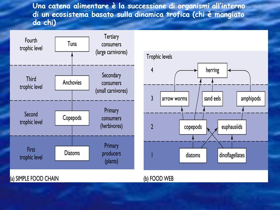 Dinamica trofica è lo studio delle relazioni nutrizionali tra organismi di un ecosistema. Livello trofico: posizione di un gruppo di organismi che si