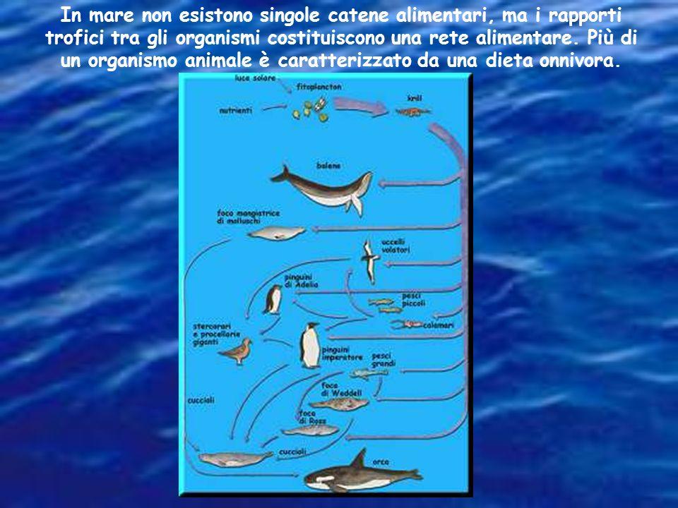 Una catena alimentare è la successione di organismi allinterno di un ecosistema basato sulla dinamica trofica (chi è mangiato da chi)