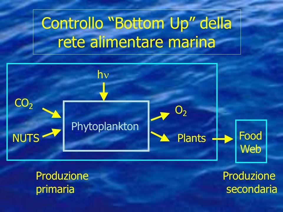 Controllo Bottom Up della rete alimentare marina Produzione Produzione primaria secondaria Phytoplankton h CO 2 O2O2 PlantsNUTS Food Web